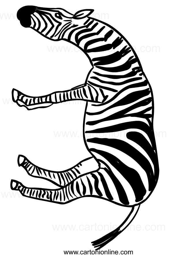Disegno di zebre da stampare e colorare