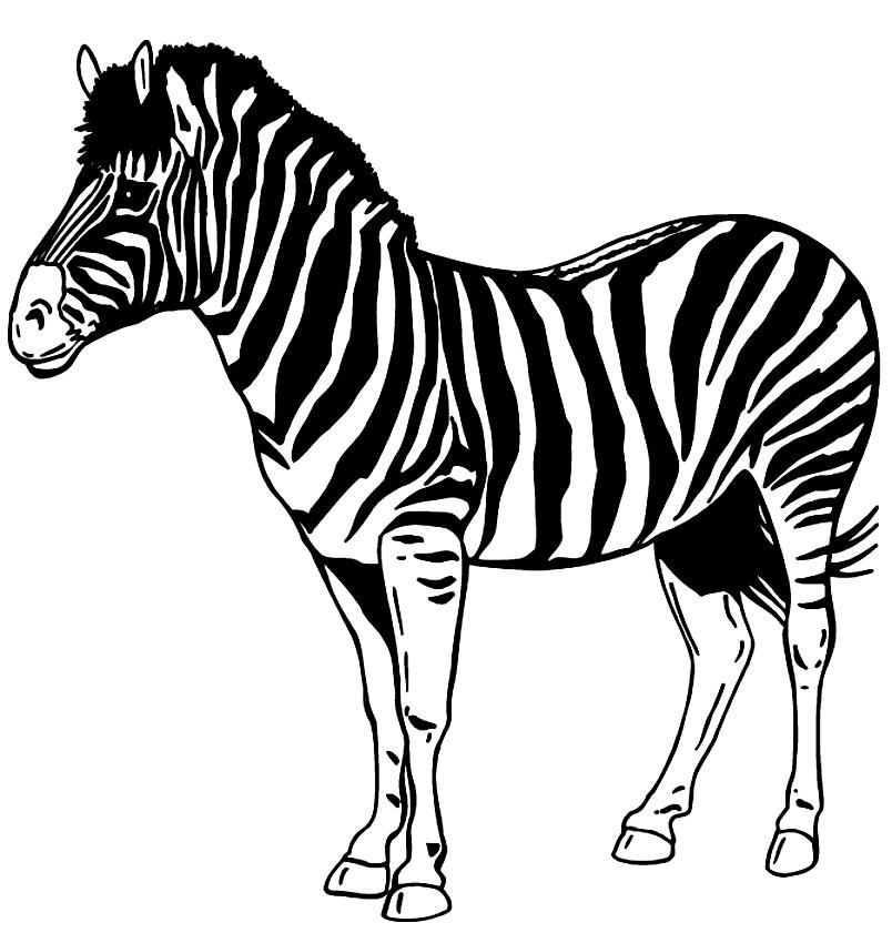 Disegno Di Zebre Da Colorare