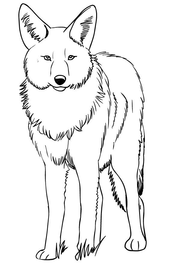 Drawing Of Coyote Coloring Page