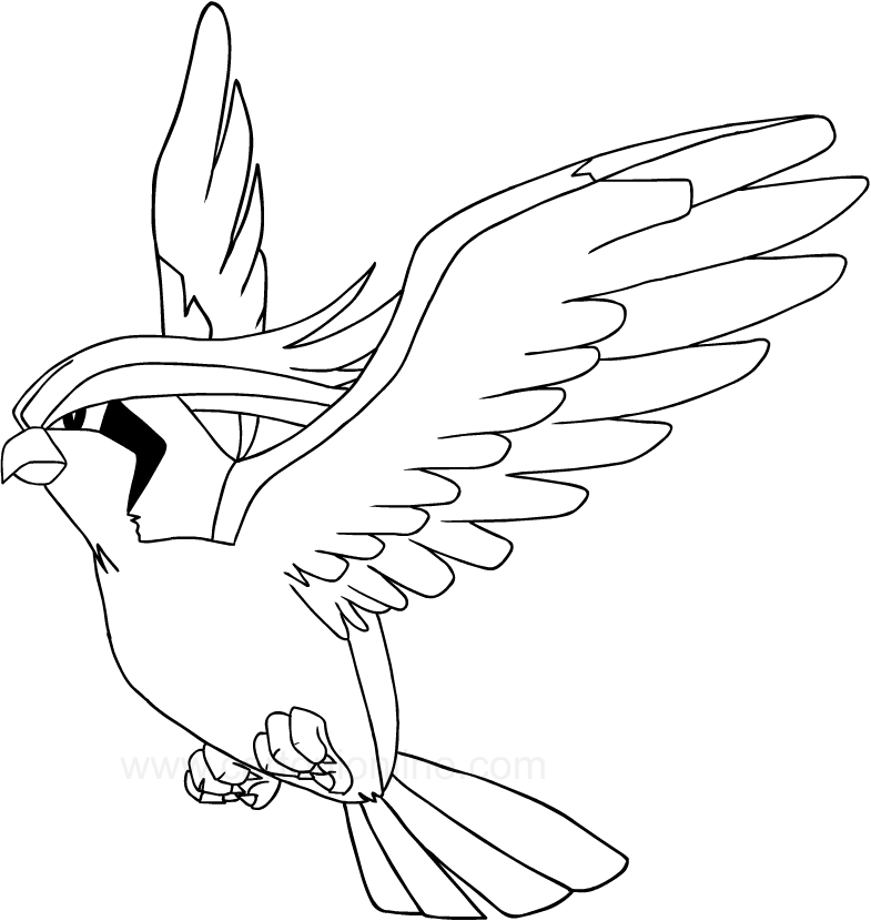 pidgeot pokemon coloring pages - photo#18
