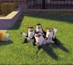 El Pinguni de Madagascar