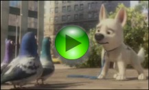The video of Bolt and the pigeons