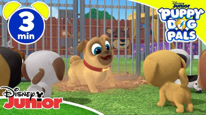 Puppy Friends | En busca del cachorro - Disney Junior Italy