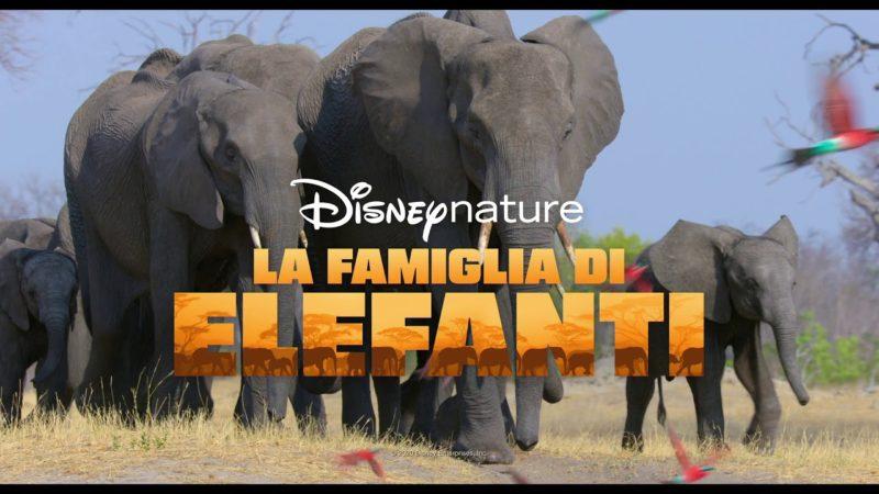 Disneynature: La Famiglia di Elefanti e Echo, Il Delfino | Disney + | In streaming dal 3 aprile