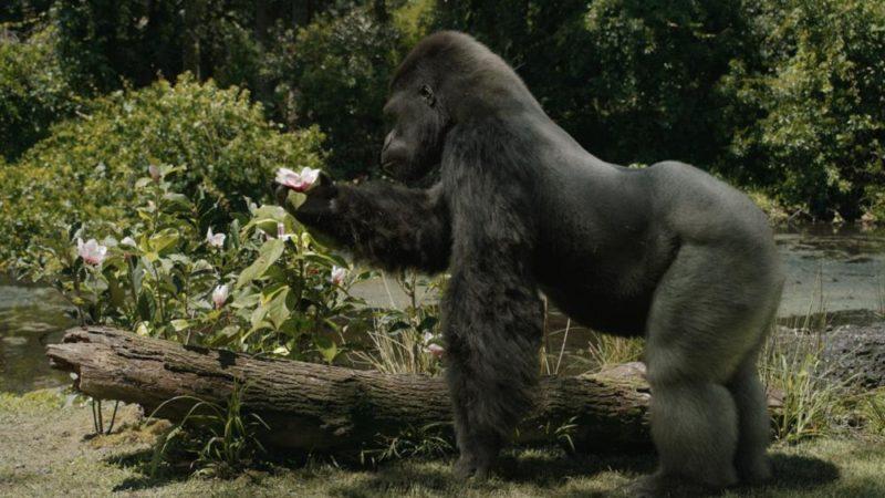「OneandOnly Ivan」:VFX Supe Ben Jonesが、ディズニー+映画の動物スターの秘密を共有します