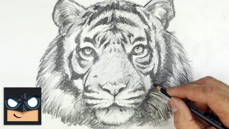 Hur man ritar en tiger steg för steg