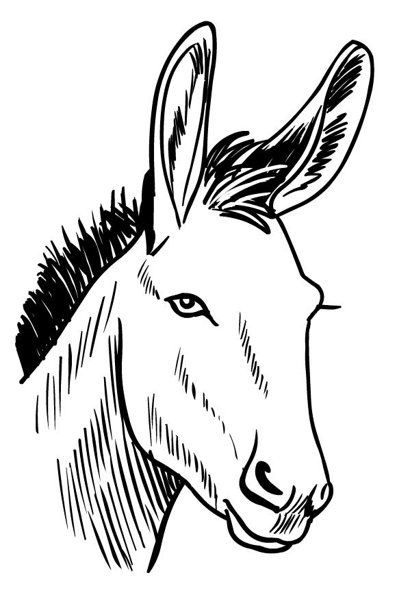 Ausmalbild esel 40 Esel