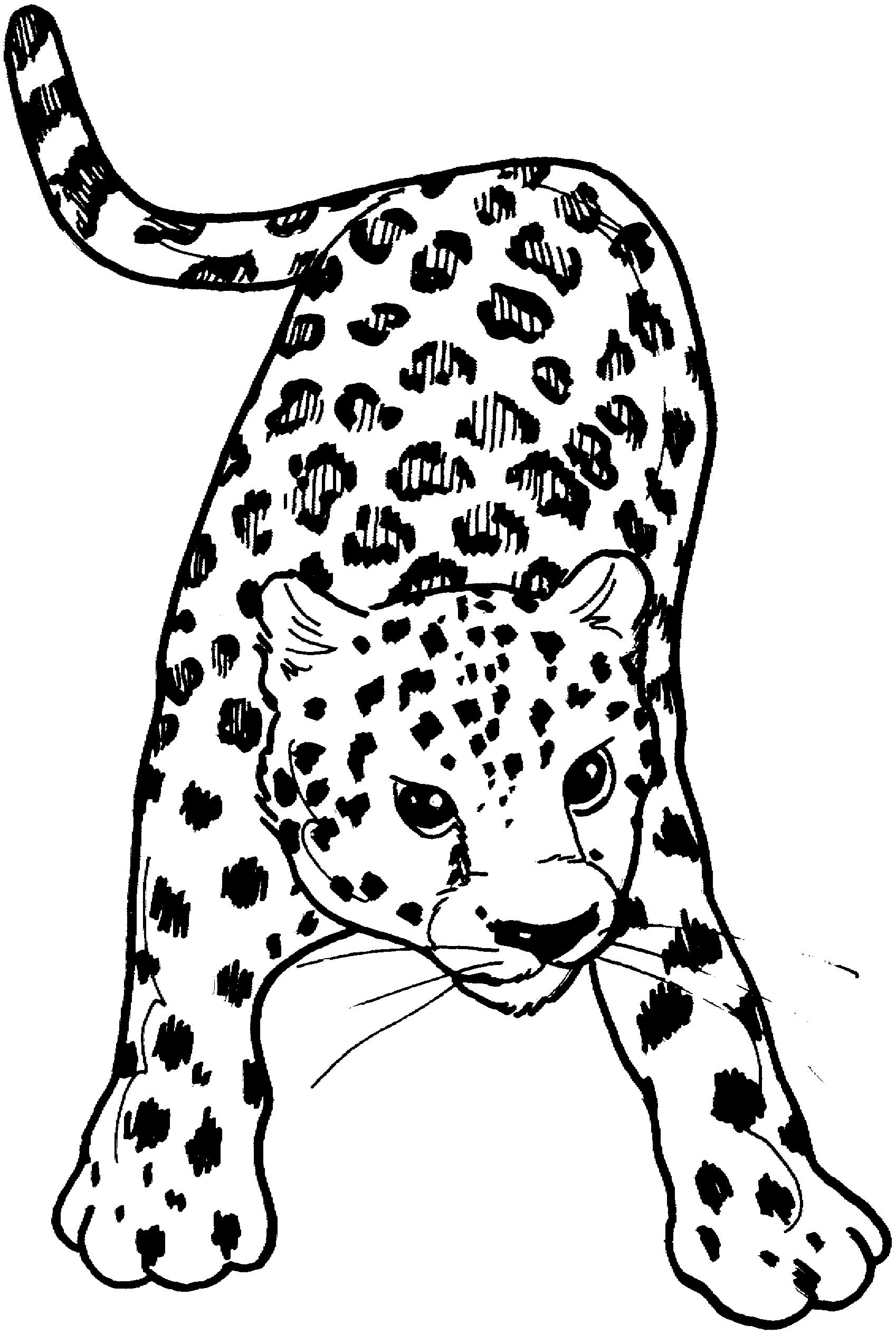 Ausmalbilder leoparden