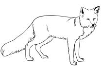Ausmalbilder Fuchse